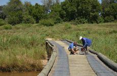 Bridge Repairs 5